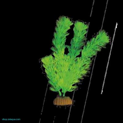 Растение светящееся в темноте №1